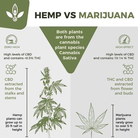 marijuana what is hemp