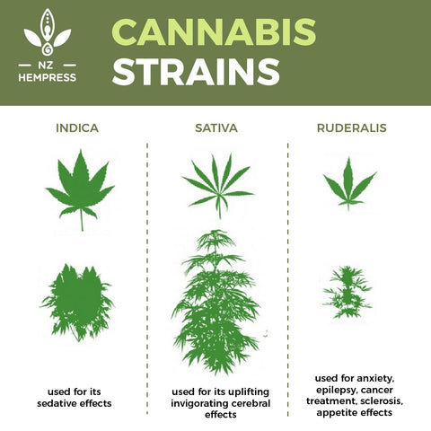 cannabis strains fact
