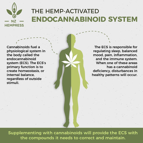 hemp endocannabinoid system facts