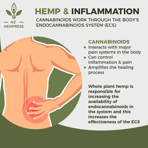 How Does Hemp Work for Back Pain