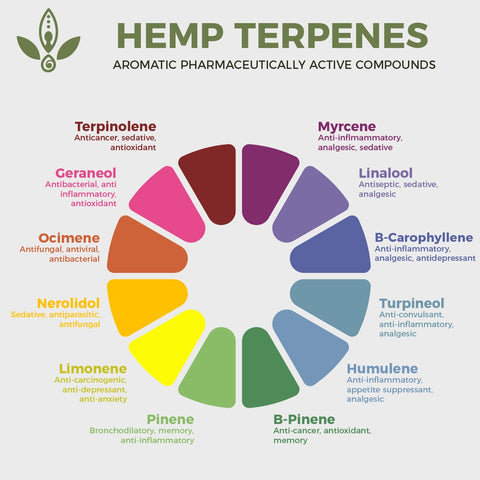 hemp terpenes explained