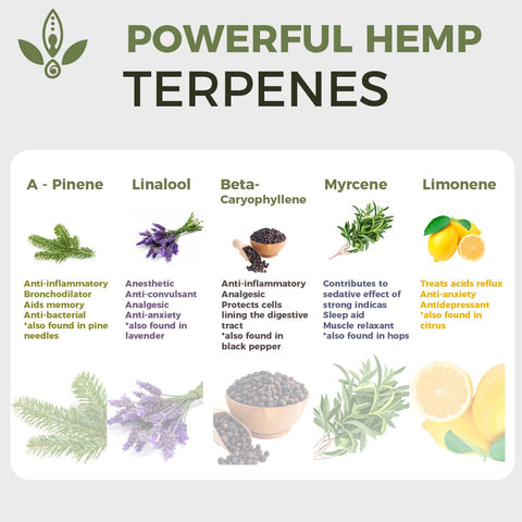 full spectrum hemp oil terpenes
