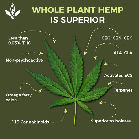 whole plant hemp buy