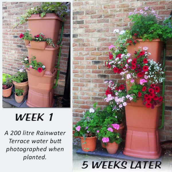 Terracotta Rainwater Terrace water butt with flowers