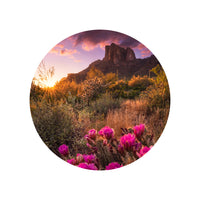 Iconic Circular Arizona View of Desert Flowers