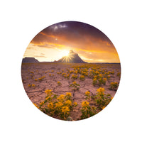 Iconic Circular Utah Wild Flower Beauty