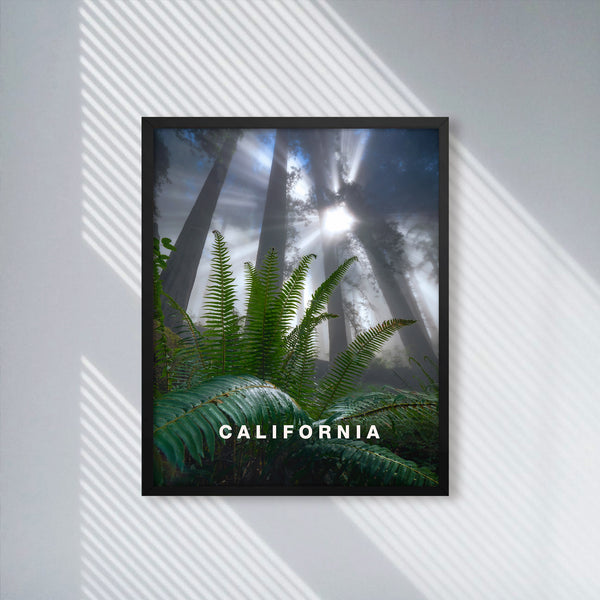 California Redwoods with California Type