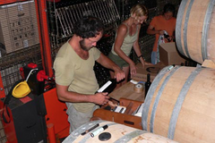 Carolin and Nikolaus Bantlin at work at Domaine Les Enfant Sauvages, Roussillon, France