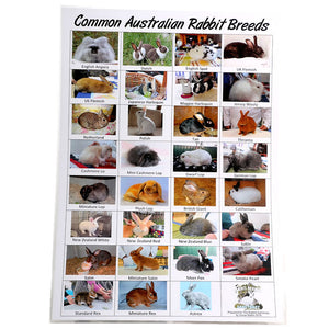 Laminated Rabbit Breed Poster