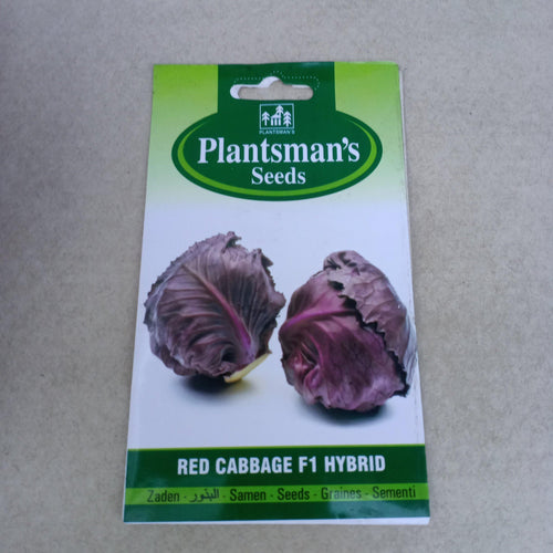 Seed Red Cabbage
