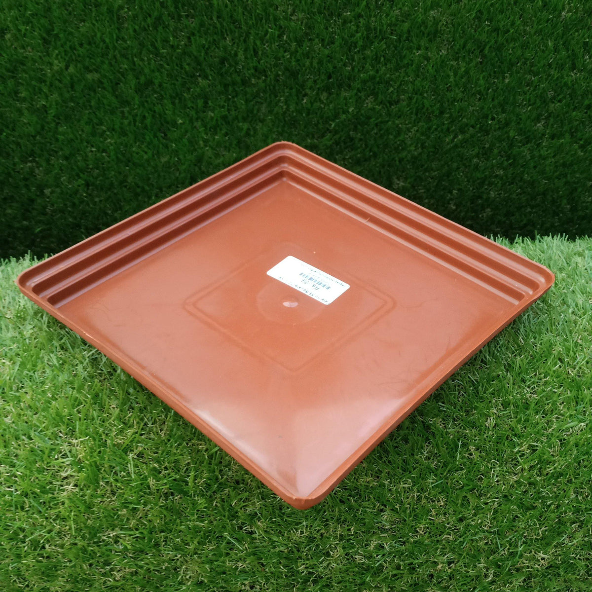 "Square Plate TC 8""×9"" - Jagtap Nursery's Garden Center"
