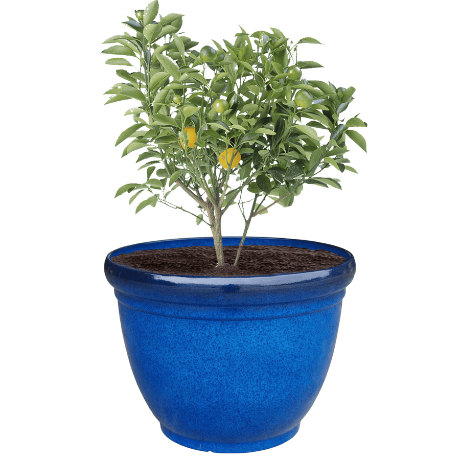 21.75 Inch Belly Planter - Jagtap Nursery's Garden Center
