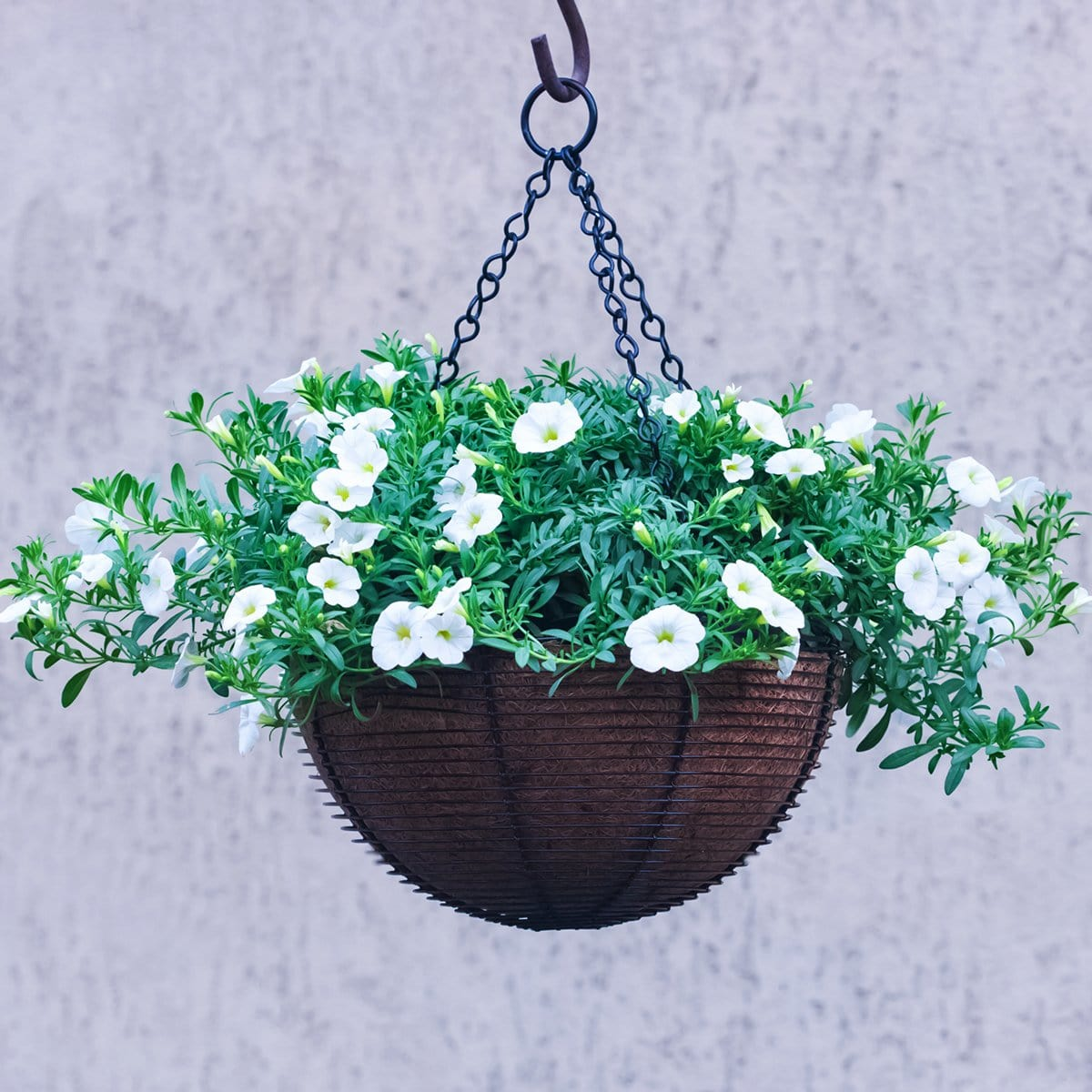 Hanging Basket with Plants