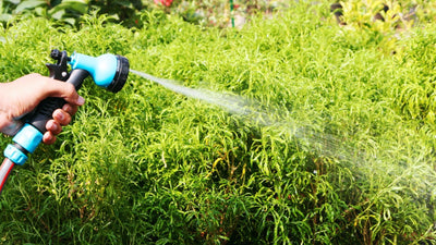 "Garden hose with shower 1/2"" - Jagtap Nursery's Garden Center"