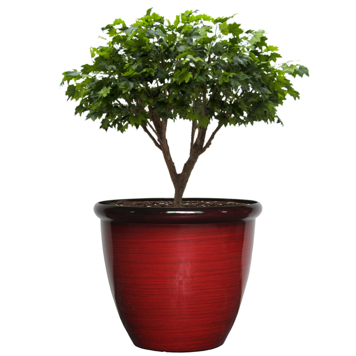 22 Inch Rim Planter - Jagtap Nursery's Garden Center