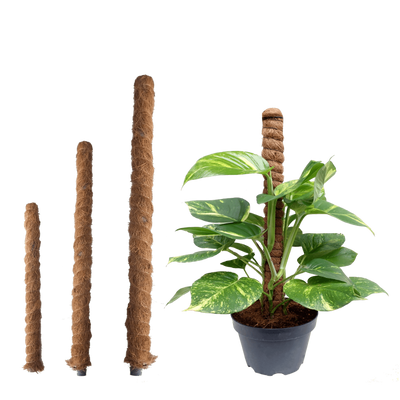 Coco Pole (Plant Support)
