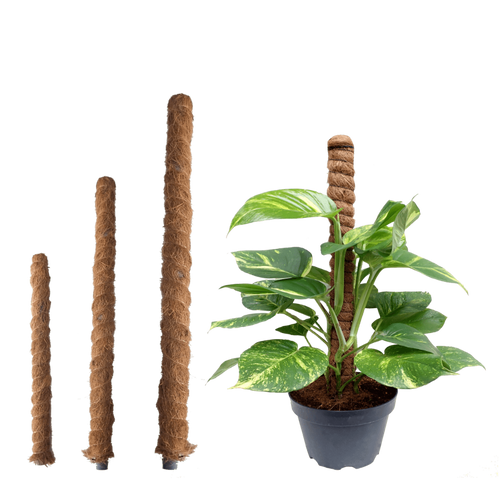 Coco Pole (Plant Support) - Jagtap Nursery's Garden Center