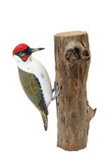 ARCHIPELAGO - Green Woodpecker