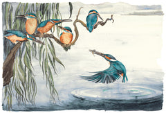 Jackie Morris Illustrations for Robert Macfarlane - Kingfishers (2018) Premium Edition