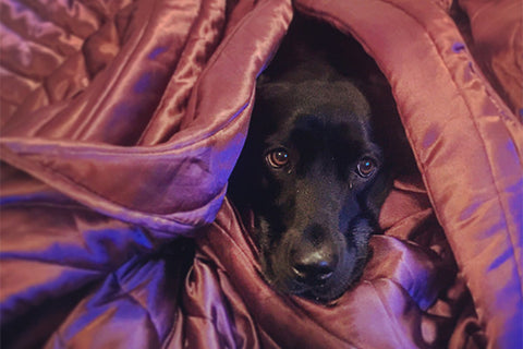 Green Gruff - Common Signs of Noise Anxiety in Your Dog
