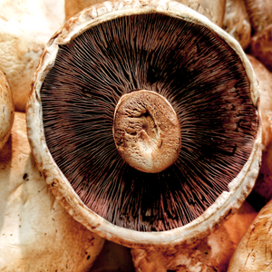 Field Mushrooms (400g)