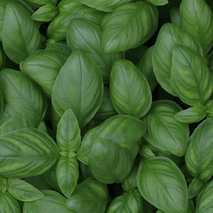 Basil Pack 50g From Big Meadow