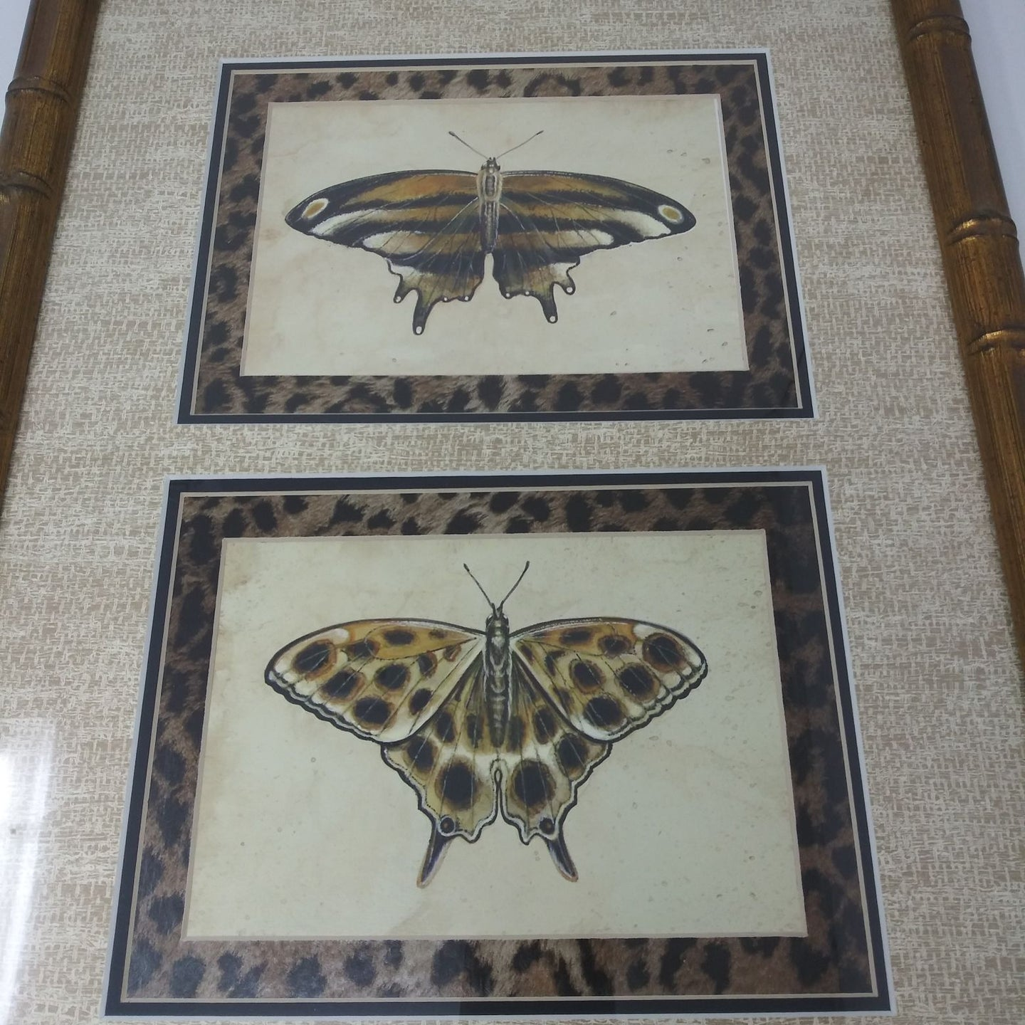 Double Matted Butterfly Picture
