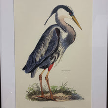 Load image into Gallery viewer, Blue Heron Print