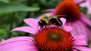 EASY POLLINATOR-FRIENDLY GARDENING