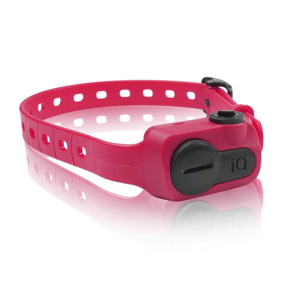 Dogtra iQ Pet No Bark Collar Pink