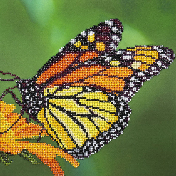 DA50452 - Monarch Butterfly