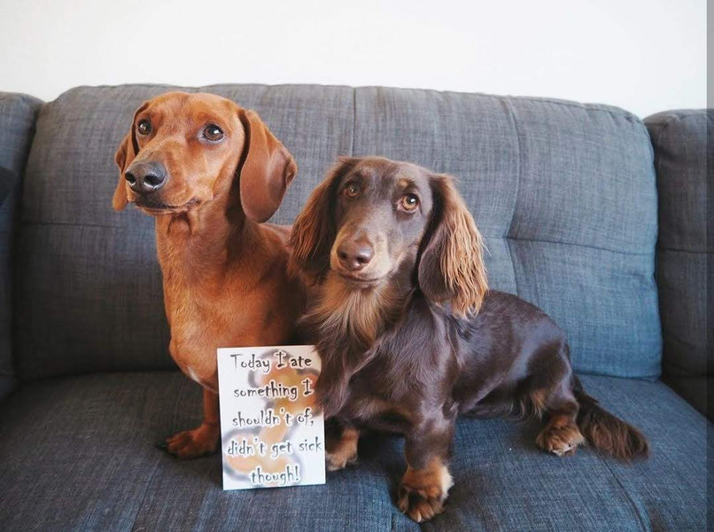Doggy Milestone Cards