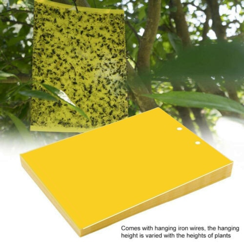 20/40Pcs sticky fly trap paper yellow trap double-sided fruit fly wheat field sticker sticky fly board fly sticker @LS - Smoulder Products