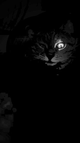 Dark Kat by Pawel Wegrzyn. Digitally edited photograph of a cat with most of the cat in shadow but one eye that seems to glow.