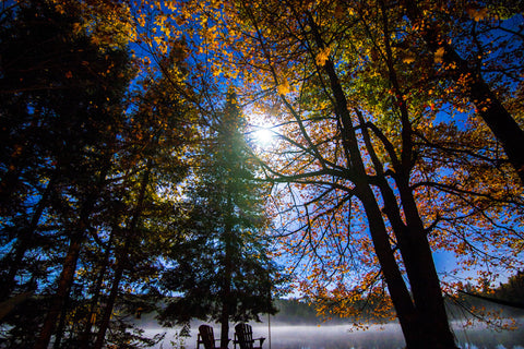 Full Moon on a Foggy Night by Barry Khan. Colour photograph of a night sky with a full moon seen through trees.
