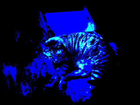 Resting by Pawel Wegrzyn. Digitally edited photograph of cat resting with a blue filter.