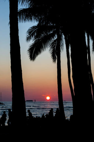 Sunset Silhouette by Barry Khan. Colour photograph of a sunset with water and palm trees in the foreground.