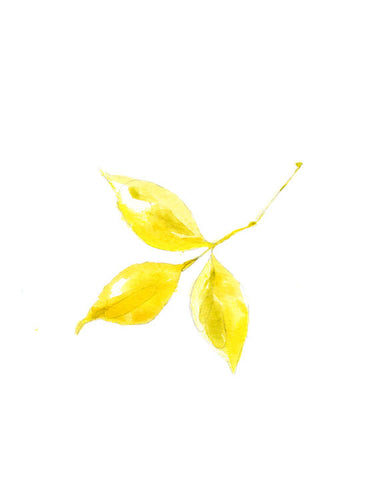Yellow Sprig
