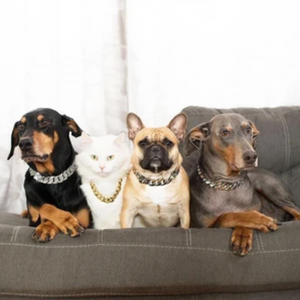 Hick Gold Chain Pets Safety Collar
