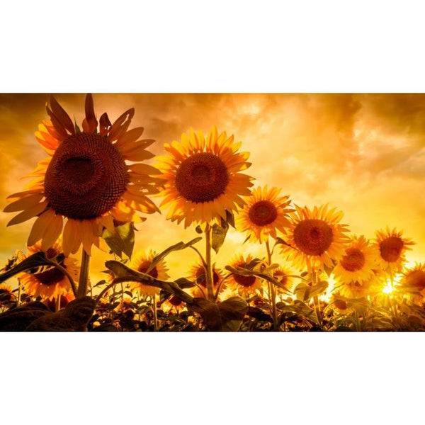 Sunflower Gold Sky - Full Round Diamond Painting