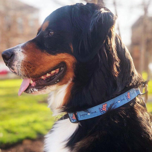 USA PUPPIE LOVE DOG COLLAR (BLUE) 5