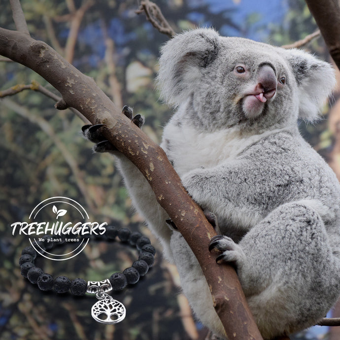 Lewis the koala dies one week after being rescued from Australian fires