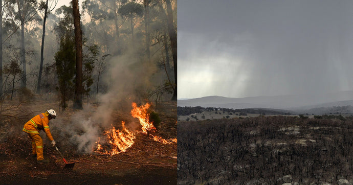 Australian fires, the aftermath: Now is the time to act!