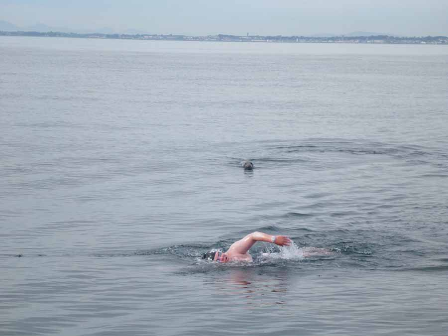 elaine howley swims the north channel