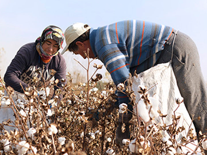People working in a sustainable organic cotton field.