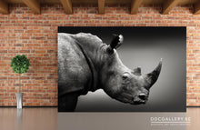 Charger l'image dans la galerie, Photo Art - Rhino