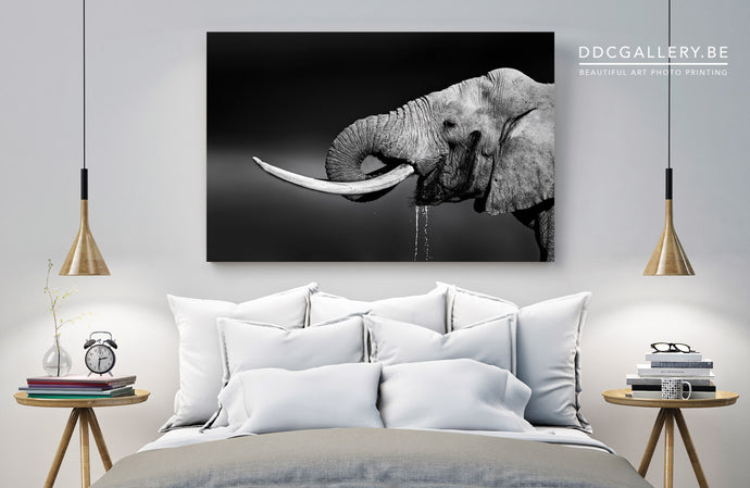 Photo Art - Elephanto
