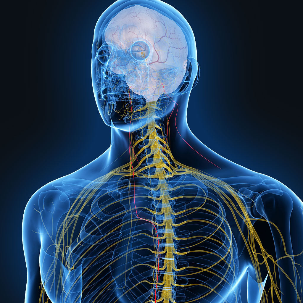 vagus nerve stimulation for health
