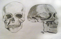 Skulls by Becky Doyon