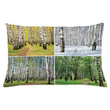 Ambesonne Landscape Throw Pillow Cushion Cover Pathway in Woodland Birch Tree Jungle in The Fall Winter Spring Summer Season Decorative Rectangle Accent Pillow Case 26 X 16 White Green